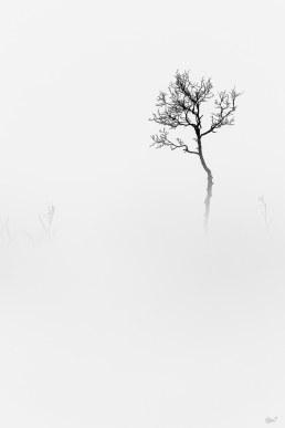 20180109-Norway Senya-5