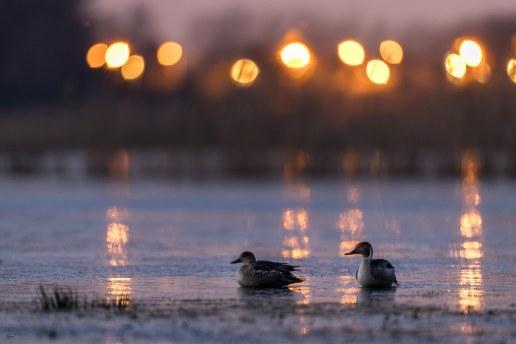 voor zonsopgang