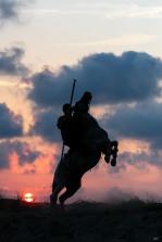 Camargue Paard