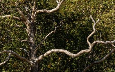 Bomen in de valei van de geisers
